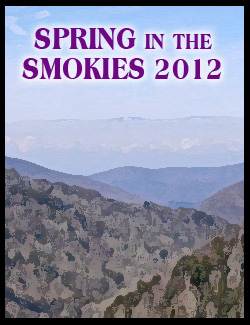 spring in the Smokies